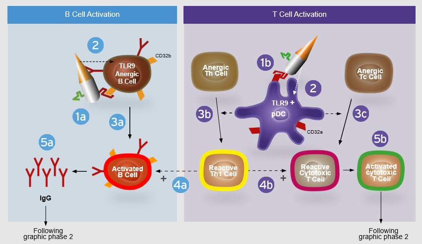 Arming the Immune Cells against Cancer